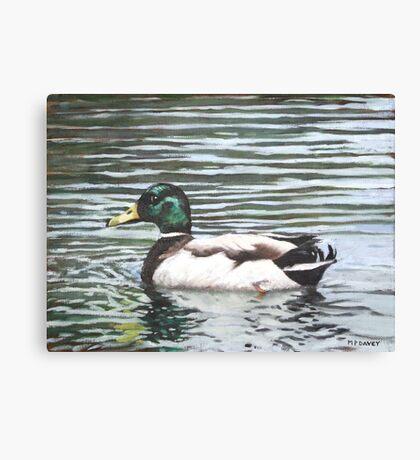 Single mallard duck in water Canvas Print