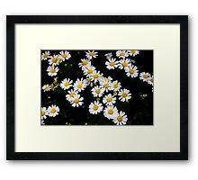 Daisies In Watercolor Framed Print