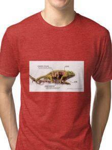 Jackson's Chameleon Anatomy with Labels Tri-blend T-Shirt
