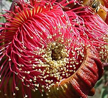 Gum Blossom by Penny Alexander