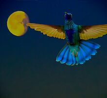 Hummingbird Moon by Al Bourassa