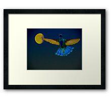 Hummingbird Moon Framed Print