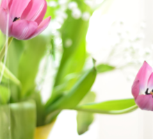 Pink Tulips In Yellow Vase Sticker