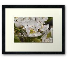 white flowers on trees Framed Print