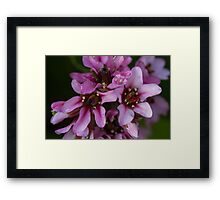 pink flower in spring Framed Print