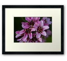 pink flower in spring Framed Print