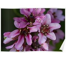 pink flower in spring Poster