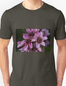 pink flower in spring T-Shirt