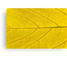 Leaf abstract texture  Canvas Print