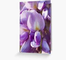 wisteria blooming Greeting Card