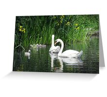 Swanning around Greeting Card