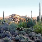 Scottsdale Sunset by Gordon Beck