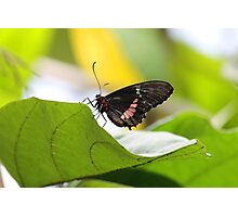 butterfly 2014 Photographic Print