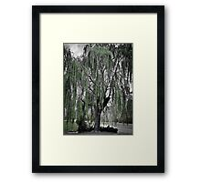 Willow After a Storm Framed Print