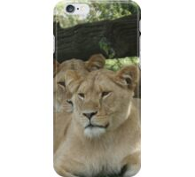 Restful Lioness iPhone Case/Skin