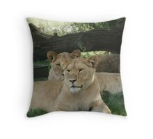 Restful Lioness Throw Pillow