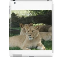 Restful Lioness iPad Case/Skin