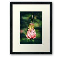 Pink Blossoms #1 Framed Print