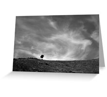 Tree on a windy hill, Corsica France Greeting Card