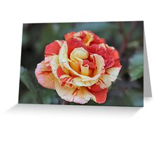 Splattered Rose Greeting Card