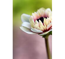 Early Spring Photographic Print