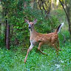 Running Deer Fawn by Jim Cumming