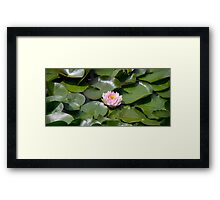 Water Lotus Framed Print