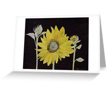 Sunflower Study Greeting Card