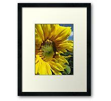 Sunflower Of The Year Framed Print