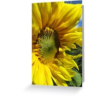 Sunflower Of The Year Greeting Card