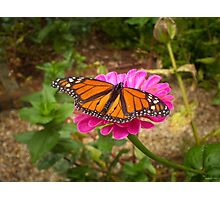 Garden Jewel Photographic Print