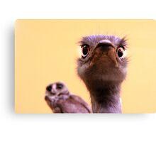 Curious Ostrich and Owl Cute Fun Photograph Canvas Print