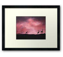 Three giraffes silhouette Framed Print