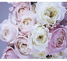 Roses are Pink Photographic Print