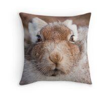 Mountain Hare Face On Throw Pillow