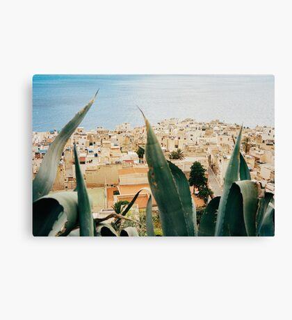 Marettimo Cacti Shot on Film (Porta 400) Canvas Print