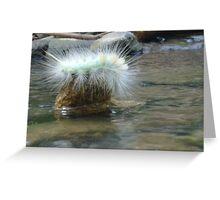 hairy caterpillar Greeting Card