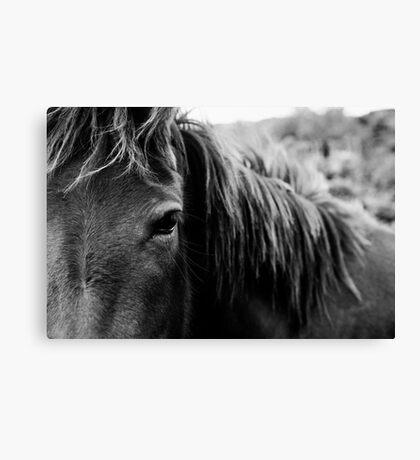 Wild Horse Up Close Canvas Print