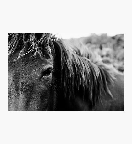 Wild Horse Up Close Photographic Print