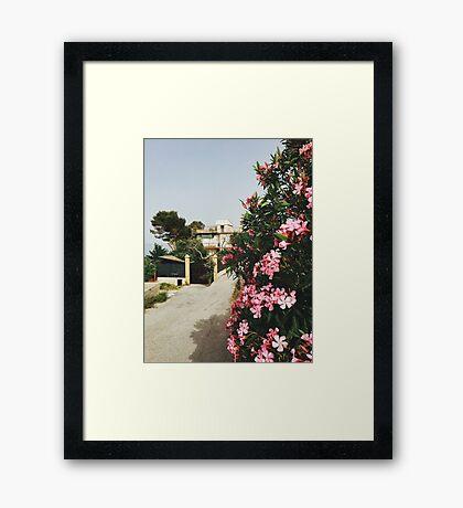 Sicilian Bloom Framed Print