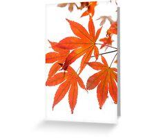 Orange Leaves of Japanese Maple Greeting Card