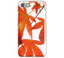 Orange Leaves of Japanese Maple Tree iPhone Case/Skin