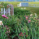 Spring Garden by Eileen McVey