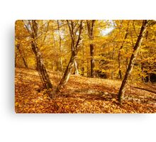 Glory of Golden Autumn Canvas Print