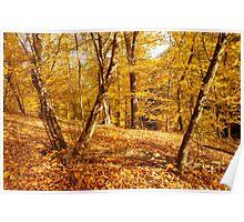 Glory of Golden Autumn Poster
