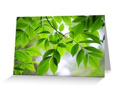 Green Leaves of Ash Tree Greeting Card