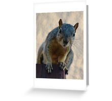 What are you looking at? Greeting Card