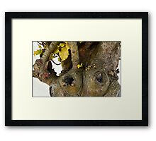 Gnarled Trunk of Ancient Holly Tree 3 Framed Print