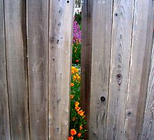 """""""Poppies Escape Out the Gate"""" by waddleudo"""