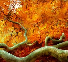 Autumn - Tree - Serpentine by Mike  Savad